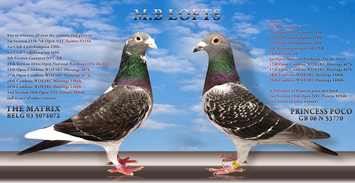 Jos Thone Pigeons