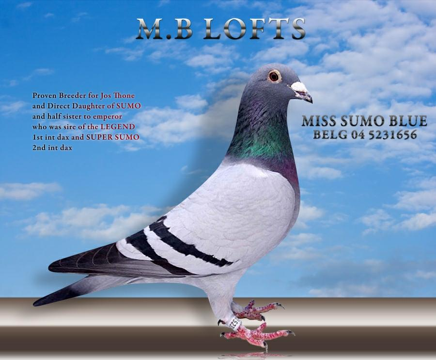 miss-sumo-blue