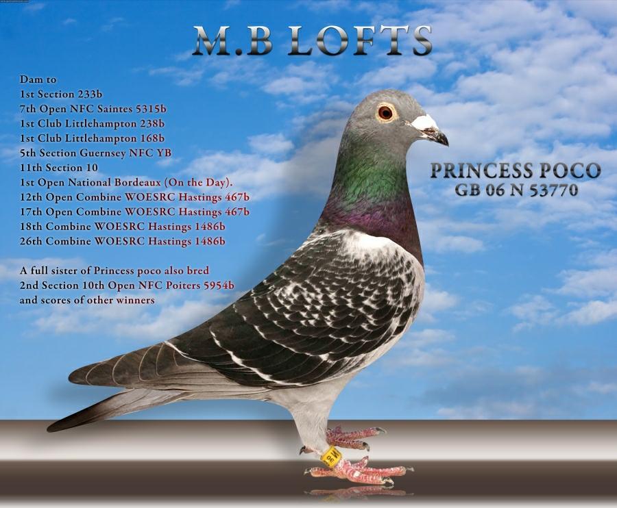 PRINCESS POCO | MB Lofts